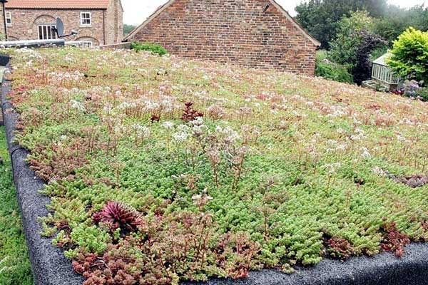 Sedum Green Roof York | TA Roofing
